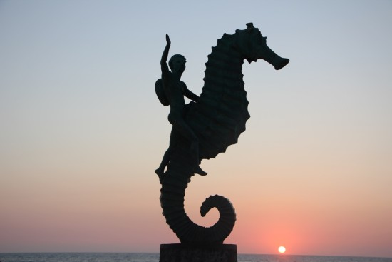 Puerto Vallarta Seahorse Image by Jeffrey James Keyes - 1